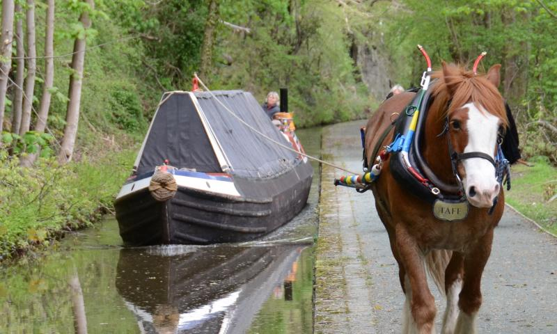 NHS-UK 2013 Photo Comp entry:Bob Jervis - Shroppie fly-boat SATURN horsedrawn on the Llangollen Canal
